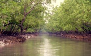 The Sundarbans - A firmament of nature