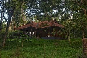Wayanad stay couldn't have been better with a stay in this cottage surrounded with lush green forest