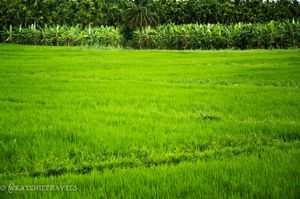 Discovering 'Green Relaxomorphins' in Jagale-Coorg