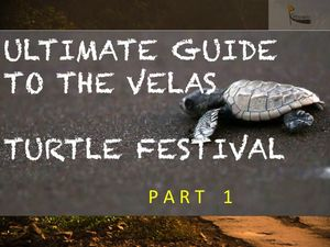 The Velas Turtle Festival Vlog-Part 1