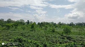 Monsoons at North Bengal Hills