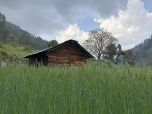 Barot - untouched paradise nestled in Himalayan valley !!