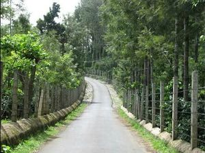 Yercaud Part -1. For All the Travel Runners Out There