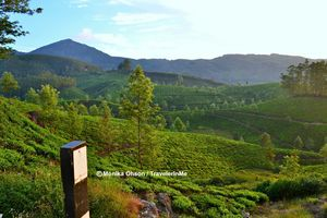 Munnar, a piece of heaven on earth!