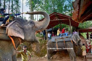 Carmelagiri Elephant Park 1/undefined by Tripoto