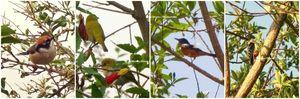 Pangot – A Birder's Paradise!