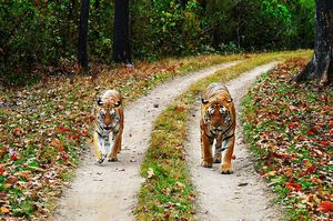 Tigers, Barasinghas And Vultures - Visit Madhya Pradesh To Witness The Best Of Wildlife Conservation