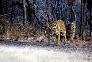 Secrets Of Ranthambore... That Locals Don't Want You To Know