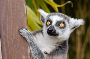 Madagascar Travel Guide - The New Superstar Of The Indian Ocean