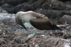 Sharks, Penguins, Dolphins And Manta Rays: A Budget Guide To Visa-Free Galapagos Islands