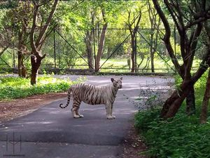 Into The Wild At Happening Bannerghatta National Park In Bengaluru