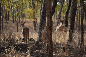 Pench National Park - peeking into Mowgli's world
