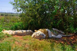 Wildlife In South Africa: This Reserve Is Home To Animals You've Grown Up Reading About