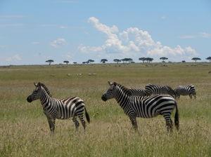 Seeing 2 Million Animals Run Across Tanzania's Landscape Is The Greatest Show On Earth