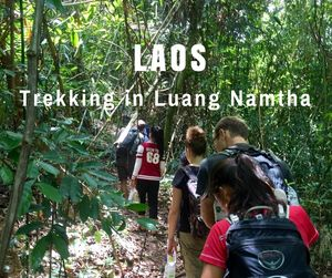 Trekking in Luang Namtha | Laos | Can Travel Will Travel
