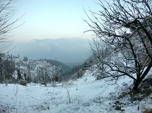 Snow trek in Sterling Forest, Manali