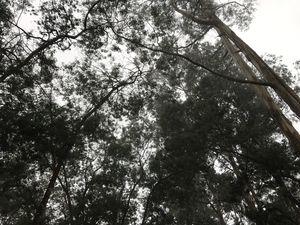 Through The Mists!!