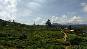Day 5 (Nuwara Eliya)