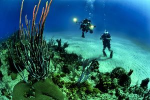 How I Dived With Sharks At One Of The Seven Wonders Of The Natural World