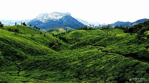 Mystic Munnar- Paradise on Earth