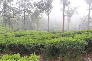 Bike Trip : Kerala