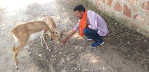 ##talchapar deer sanctuary## churu##deerlove##