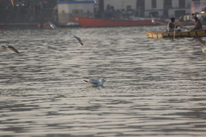 Ghats of Banaras and Boat rides with Seagulls everywhere