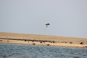 Golden sand beach #kerala #southindiaitinerary