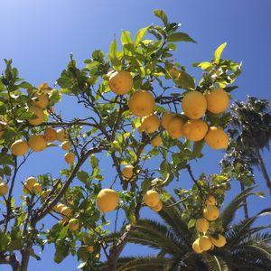 """Juicy Lemons""  #BestTravelPictures @tripotocommunity"