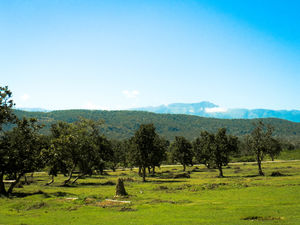Mysore to Ooty via Bandipur Forest : a road trip to remember