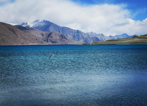 Bluest Travel Pictures from Pangong Lake