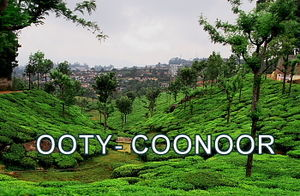 Ooty- Coonoor- The Green Giants!
