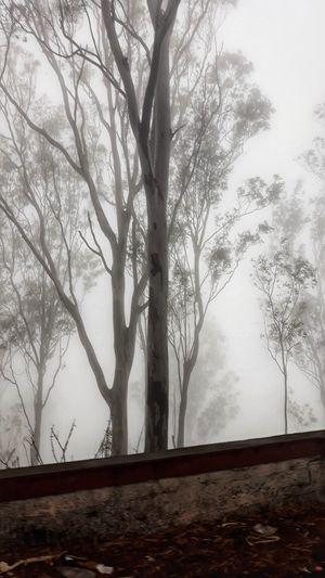 Drive through the Clouds,  Nandi Hills
