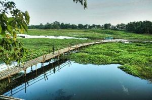 Majuli : Water Water everywhere!