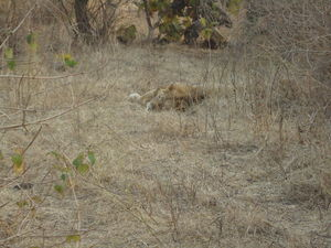 Gir National Park : The Pride Of Gujarat