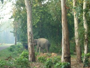Visit this National Park on your next visit to Rishikesh to set a date with the elephants