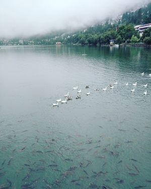Nainital lake Uttarakhand            August 3 2018