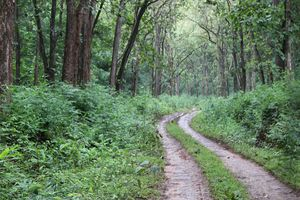 Bhadra Wildlife Sanctuary 1/undefined by Tripoto