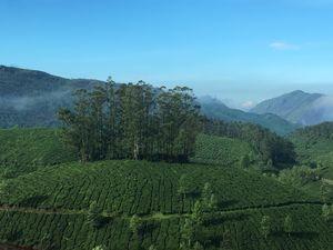 <u>Munnar: Amidst Mist</u>