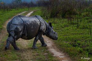 Manas National Park – A True EDEN Of Natural Biodiversity
