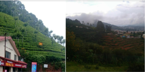 The Tea Factory and The Tea Museum 1/undefined by Tripoto