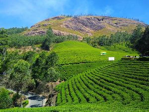 Tea Estates in Munnar! #BestTravelPictures  @tripotocommunity @jetairways