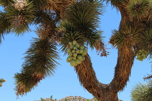 Joshua Tree National Park 1/undefined by Tripoto