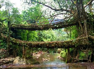 Trip to Kolkatta & Meghalaya