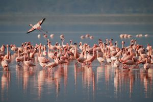 Are You A Nature Lover But Sick Of Mumbai's Concrete Jungle? Take This Flamingo Safari!