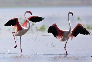 Bhigwan: Bird watching treat