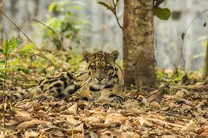 Sepahijala Wildlife Sanctuary 1/undefined by Tripoto