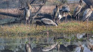 Bharatpur Bird Sanctuary: A day in Nature's lap