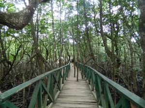 All about mangroves: In Andamans