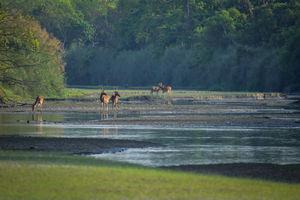 Dudhwa Tiger Reserve - A Stunning Landscape